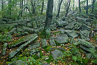 Birch Hill Rocks, Forbes State Forest. Sept 2008