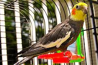 Biter the bird parakeet image for sale