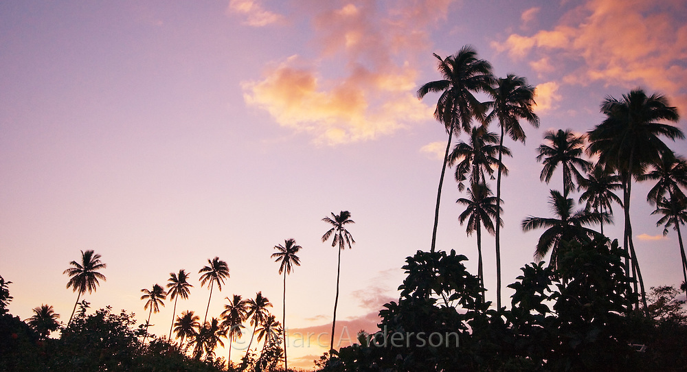 Palm trees at dusk on a tropical island in Fiji