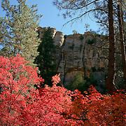 Rock surrounded by vivid color - Oak Creek Canyon, AZ