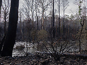 Winter run-off, but I wonder how much water there was when this fire came through