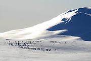 VÃ¥rflytting i Essand reinbeitedistrikt. Simleflokken passerer Øyfjellet i Tydal, pÃ¥ veg nordover mot kalvingsomrÃ¥det og sommerbeitet i Roltdalen, Skarvene, Skarpdalen og MerÃ¥ker. The south sami group of Saanti Sijte moving the herds every spring passed the mountain Øyfjellet in Tydal.
