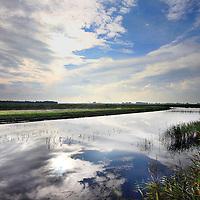 Nederland, Landsmeer , 12 oktober 2013.<br /> NOORD-HOLLAND LAAT UNIEK VEENGEBIED AANGROEIEN<br /> Het is een unieke biotoop op aarde; het door zeewater gevormde veengebied in Noord-Holland. Om te voorkomen dat op termijn het zilte veen verdwijnt, begint Landschap Noord-Holland een project om de bedreigde veenmossen te laten groeien.<br /> Het groeiende veen zorgt niet alleen voor behoud van beschermde soorten, maar kan ookbodemdaling tegengaan. Daarnaast neemt veen CO2 op – terwijl het natuurlijke afbraakproces van veen juist kooldioxide uitstoot -, wat goed is voor het milieu. De universiteit gaat ook onderzoeken bij welke hoeveelheid stikstof in de lucht (zure regen) het veen nog wil groeien. Mogelijk is er toch ontwikkelruimte voor agrarische bedrijven die aan hun maximale stikstofuitstoot zitten.<br /> <br /> North Holland and the Radboud University Nijmegen will ensure that the peat moss will grow on agriculturally used grassland again. In this way, the peat habitat  with its specific plant and animal species wil be preserved..