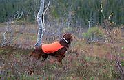 Bird dog field training
