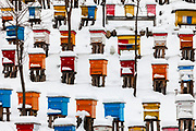 A lot of beehives covered with snow