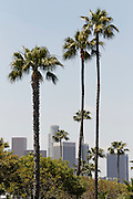LOS ANGELES, CA - MAY 27:  Palm trees and downtown skyscrapers frame the background prior to the Los Angeles Dodgers game against the Houston Astros on Sunday, May 27, 2012 at Dodger Stadium in Los Angeles, California. The Dodgers won the game 5-1. (Photo by Paul Spinelli/MLB Photos via Getty Images)
