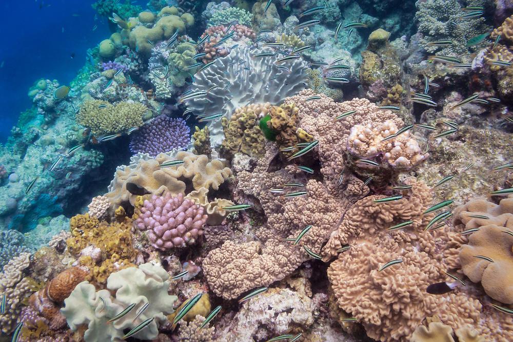 Tropical coral reef - Agincourt reef, Great Barrier Reef, Queensland, Australia.