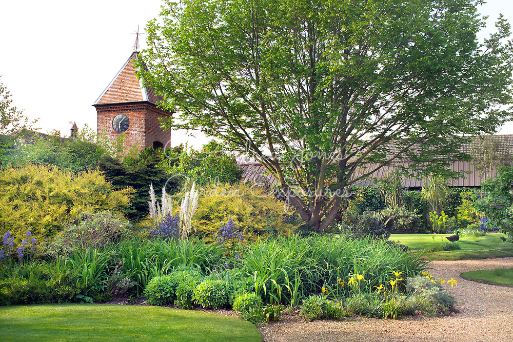 Large mixed border including Ceanothus in flower, Hydrangea, Cortaderia, Sedum, tulips and Lonicera nitida. The Clock House with lawns and gravel paths. <br /> <br /> Denmans Garden, Chichester, West Sussex. <br /> Design by John Brookes