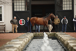 Gainesway Stallion show of Karakontie and his first foals, Wednesday, March 29, 2017 at Gainesway Farm in Lexington.