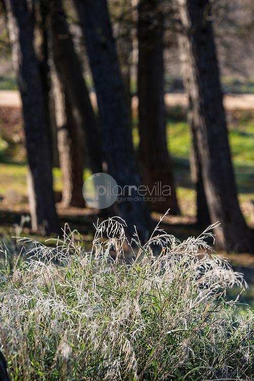 Plantas heladas y Bosque de pinos. Almansa. Albacete ©Antonio Real Hurtado / PILAR REVILLA