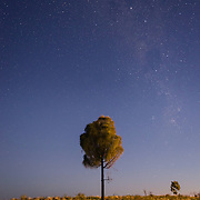 Tree and night sky in Australian outback