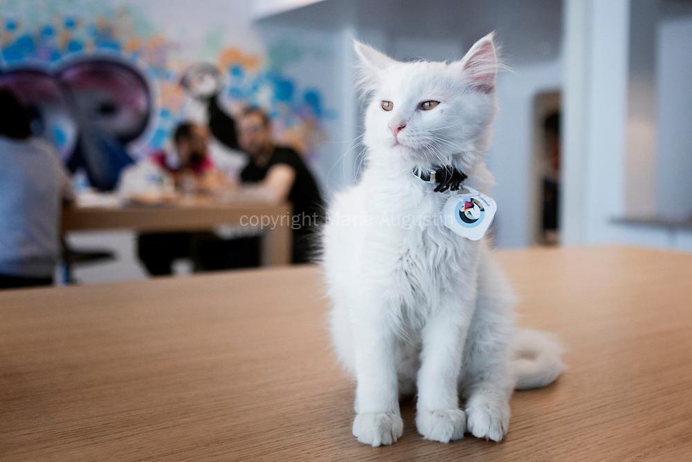 Puffy, un chaton Maine Coon, fait partie intégrante de l'entreprise et évolue à sa guise dans les locaux.