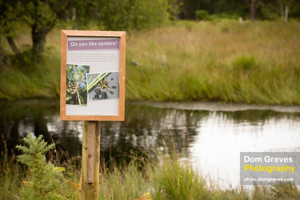 Raft spider habitat and interpretation board beside boggy pond. RSPB Arne, Dorset, UK.