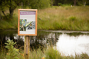 Raft spider habitat and interpretation board beside boggy pond. RSPB Arne, Dorset, UK.