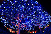 Blossoms of Light , one million lights illuminating the Denver Botanic Gardens during the holiday season, Denver, Colorado USA