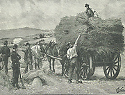 Irish Land League: In 1880 Parnell began campaign of social ostracism. Captain Boycott, agent for Lord Erne's Mayo estates, was one of the first victims.   Boycott's crops being harvested by Orangemen volunteers protected by troops, 1880.