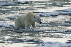 Svalbard #29 2016