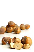 Studio shot of hazelnuts at white background