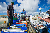 Offloading the daily catch of Yellowtail for the market, Struisbaai Harbour, Western Cape, South Africa.