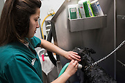 Miriam works at the AG-Mart Pet Supply Store in Brownwood, Texas as part of her TJJD work program on January 20, 2016. (Cooper Neill for The Texas Tribune)