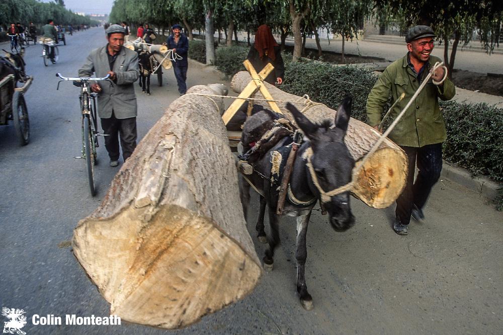 Donkey cart hauls huge poplar logs, Kashgar, Far western China, Central Asia
