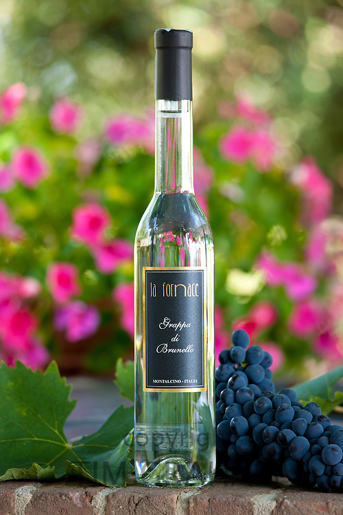 La Fornace Grappa di Brunello bottle at wine estate of La Fornace in Val D'Orcia, Tuscany, Italy