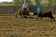 Dave Weyer rides Quarter Horse in cutting competition at Big Timber, Montana