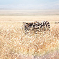 Gallery: Africa