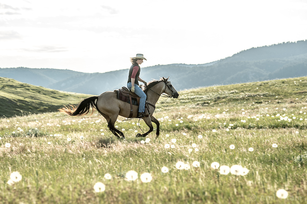 Researcher Marisa Lipsey works her horse &quot;Dakota&quot; at the Matador ranch &quot;grass bank&quot;. The &ldquo;grass bank&quot; is an innovative way to leverage conservation gains, in which ranchers can graze their cattle at discounted rates on Conservancy land in exchange for improving conservation practices on their own &ldquo;home&rdquo; ranches. In 2002, the <br /> Conservancy began leasing parts of the ranch to neighboring ranchers who were suffering from  severe drought, offering the Matador&rsquo;s grass to neighboring ranches in exchange for their  participation in conservation efforts. The grassbank has helped keep ranchers from plowing up native grassland to farm it; helped remove obstacles to pronghorn antelope migration; improved habitat for the Greater Sage-Grouse and reduced the risk of Sage-Grouse colliding with fences; preserved prairie dog towns and prevented the spread of noxious weeds. (Photo By Ami Vitale)