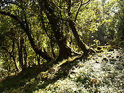 The enchanted forests of Khonoma. Forests in Nagaland belong to the communities. People of Khonoma have banned hunting and made a sanctuary for their state bird, Trogopan.
