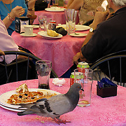 Pigeon and remnants of finished pizza meal on table at outdoor cafe in piazza del Comune Assisi Italy