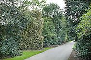 Ilex walk ('Lovers Lane') at Royal Botanic Gardens, Kew