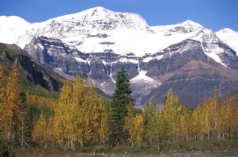 View from Homestead, Wrangell Mountains, The Pilgrim Family, Alaska, USA