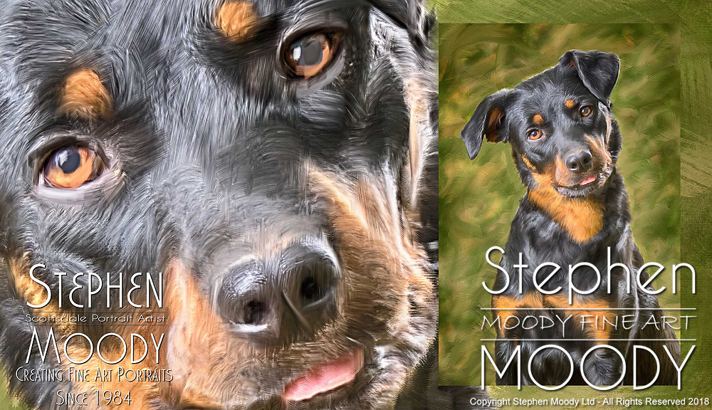 Biscotti the Rotti - Fine Art Pet Portraits by Scottsdale Portrait Artist Stephen Moody - Commissioned Mixed Media Portraiture