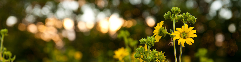 Wildflower Treasures