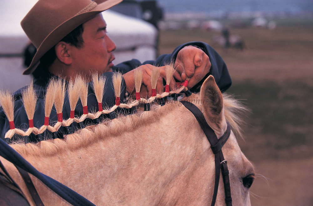 Decorating horses<br /> Naadam annual festival<br /> Ulaanbaatar<br /> Mongolia