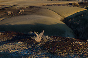 Details in the desert landscape, light and shadow play accross the Bisti Badlands, New Mexico.