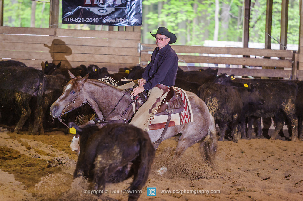 May 21, 2017 - Minshall Farm Cutting 4, held at Minshall Farms, Hillsburgh Ontario. The event was put on by the Ontario Cutting Horse Association. Riding in the Non-Pro Class is Greg Wilde  on Bobby Cee Lena owned by the rider.