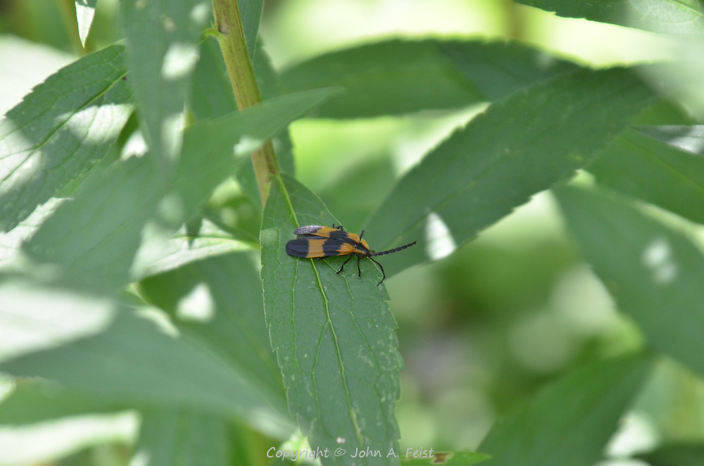 An interesting winged insect resting in the shade of the peace garden at Kripalu, Stockbridge, MA