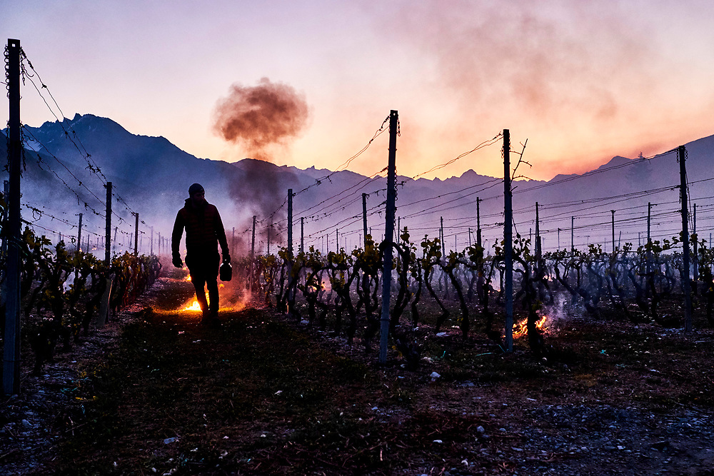 Wine makers in Valais try to save the vine from the unespected night  freezing temperatures happening in spring.