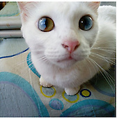 Cat's Eyes Have A Whole Universe Inside