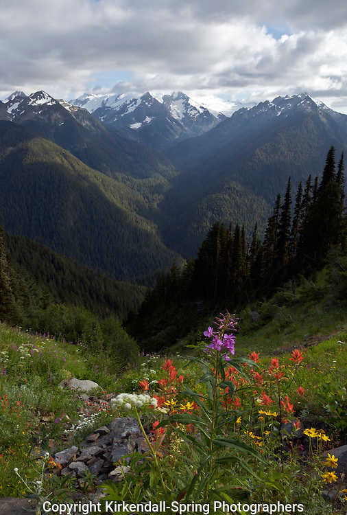 WA10665-00...WASHINGTON - A cloud covered Mount Olympus and Mount Tom from the Cat Peak Trail in Olympic National Park.