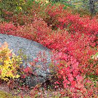 Fall foliage time in Acadia National Park, near Bar Harbor, Maine.