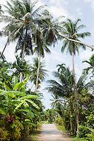 Unpaved road along tropical trees; Koh Pha Ngan; Thailand