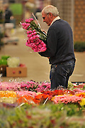 © Licensed to London News Pictures. 15/03/2012. London, UK. A porter sorts an order amongst the flowers. The Mothering Sunday sales rush is on for flower growers, suppliers, florists and retailers amongst the Flowers at the New Covent Garden Flower Market on March 15th 2012 in London, England. New Covent Garden Flower Market is London's premier wholesale market stocking the widest range of flowers, plants and foliage in the UK. The run up to Mothers' Day is crucial in the flower selling calendar as Mothers' Day sales are condensed into about four days making the market very busy. Traditionally, Mothering Sunday was a day when children, mainly daughters, who had gone to work as domestic servants, were given a day off to visit their mother and family. Today, Mother's Day is a time when children give flowers and cards to their mothers, and generally pamper them..  Photo credit : Stephen SImpson/LNP