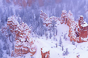Rock formations in fog below Bryce Point after a winter storm, Bryce Canyon National Park, Utah