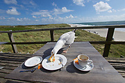 Sylt, Germany. Samoa Seepferdchen. A seagull stealing food from visitors' tables.