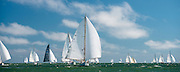 Dorade sailing in the Opera House Cup regatta.