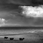 Orkney and the Isle of Stroma from East Mey, Caithness