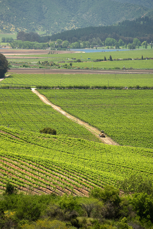 Vineyard, Maipo Valley, Chile